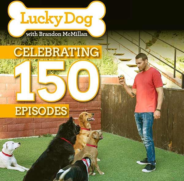 Image of Brandon McMillian from the TV show, Lucky Dog